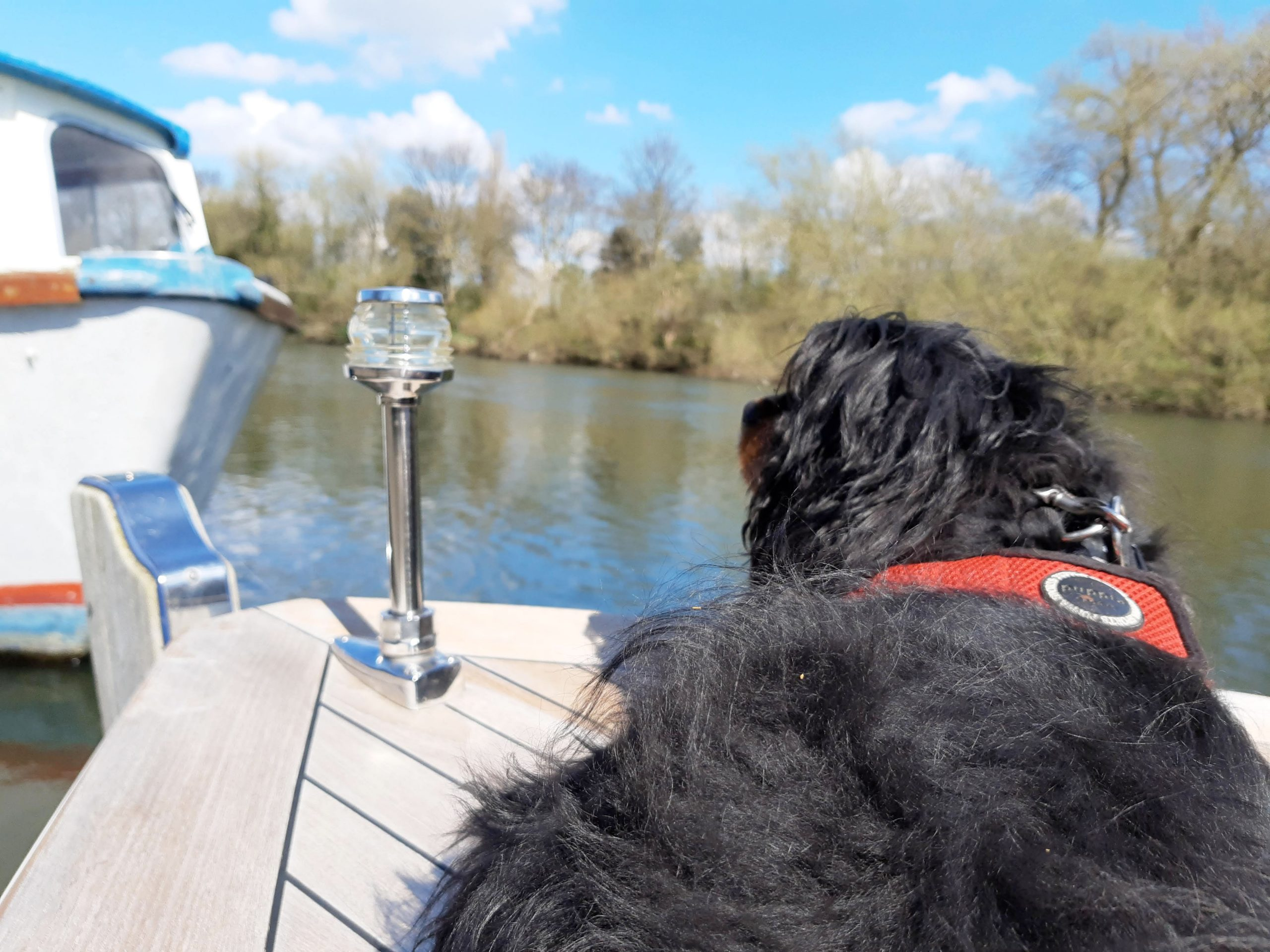Photo of dog looking out from bow of boat on Thames